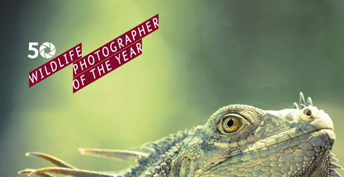 Wildlife-Photographer-of-th