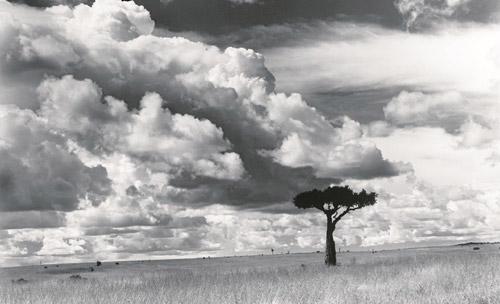 Arczynski-S_drzewa1