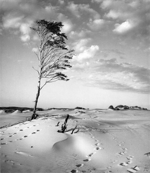 Arczynski-S_drzewa2