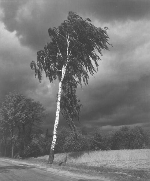 Arczynski-S_drzewa3