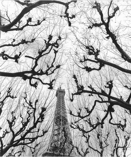 Arczynski-S_drzewa4