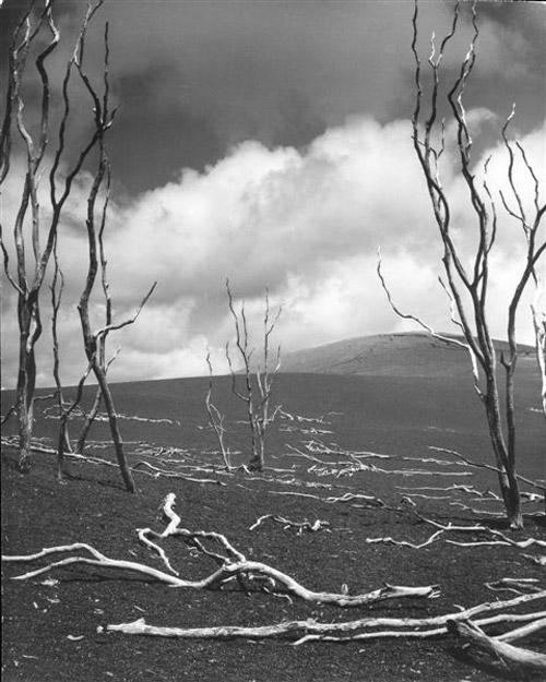 Arczynski-S_drzewa5