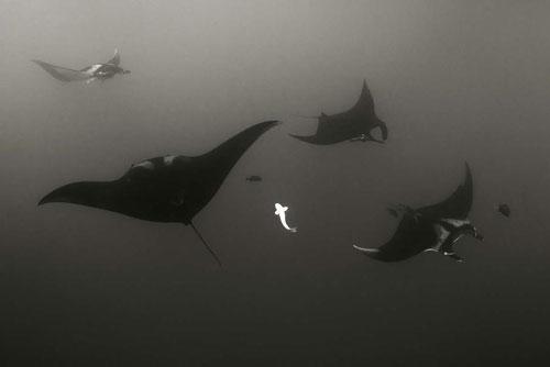 GDT2015-Under-Water2